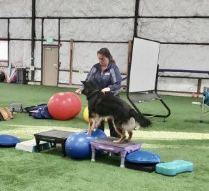 Dog and handler demonstrating FitPas Equipment