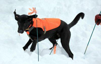 K9 Makalu in the Snow