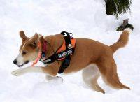 K9 Roxy in the Snow