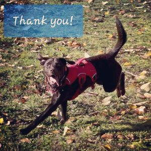 Dog in a vest playing in a field and a caption of Thank You